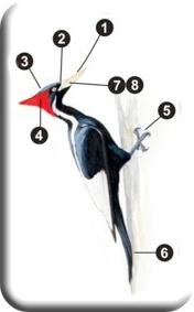 PicWoodpecker